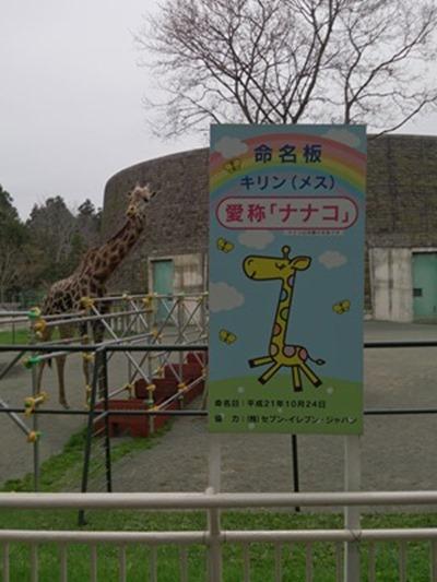 maruyama_004